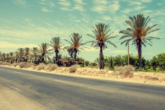 Empty asphalt road in the red-hot desert. Empty asphalt road in the middle of the oasis in the red-hot desert Royalty Free Stock Photo