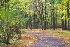 Empty autumn footpath Royalty Free Stock Photos