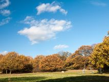 Empty autumn grass and tree landscape sky clouds. Essex; england; uk Royalty Free Stock Photos