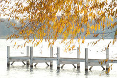 An empty autumn lake dock with gold tree Stock Photos