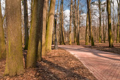 Empty autumn park with paths Royalty Free Stock Photo