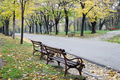 Empty Autumn Park. Two empty benches aside of the road in a park in autumn. Photo taken in Nis, Serbia Royalty Free Stock Photo