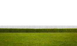 Empty backyard. Isolated on white background with copy space stock photo