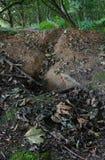 Empty badger sett Royalty Free Stock Photography