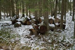 Empty barrels in forest royalty free stock image