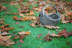 Empty Basket On Grass In Leaves Stock Images