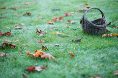 Empty Basket On Grass With Leaves Horizontal Royalty Free Stock Photo