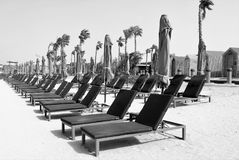 Empty beach. Black and white. Empty beach with loungers and closed parasols royalty free stock image