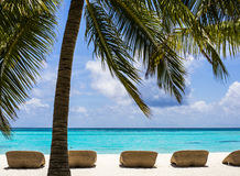 Empty beach chairs under palm tree, Maldives Stock Photography