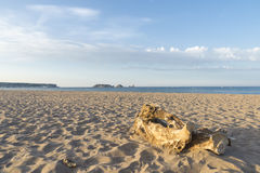 Empty beach in Costa Brava royalty free stock photography