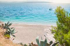 Empty beach with exotic vegetation Royalty Free Stock Images