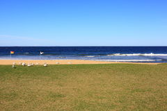 Empty beach and lawn with seagulls Royalty Free Stock Photography
