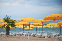 Empty beach, palm tree, yellow umbrellas, white chaise lounges.   No season, no tourists, assault warning. Cold snap royalty free stock images
