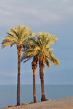 Empty beach and palm trees on the Dead Sea Royalty Free Stock Photography