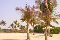 Empty beach with palm trees Royalty Free Stock Images