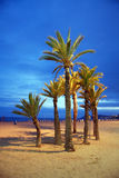 Empty beach with palms royalty free stock image