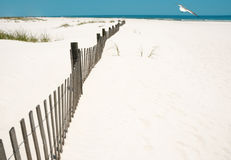 Empty Beach and Seagull Overhead Royalty Free Stock Photos