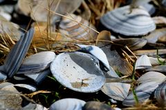 Empty beach shells on the sun in the grass Stock Photo