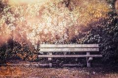Empty bench in autumn garden or park Stock Photos
