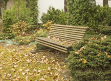 Empty bench, autumn leaves, grass, bushes in park Royalty Free Stock Photography