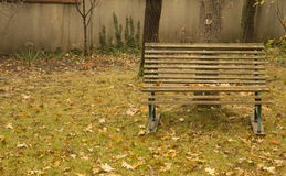Empty bench, autumn leaves, grass in park Stock Images
