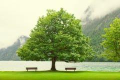 Empty bench at autumn mountain lake. Coast under bended tree mou Stock Photo