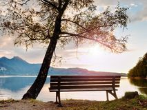 Empty bench at autumn mountain lake. Coast under bended tree Royalty Free Stock Image