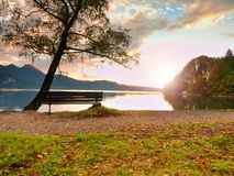 Empty bench at autumn mountain lake. Coast under bended tree Stock Photography