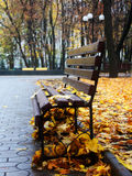 Empty bench in a autumn park. With yellow leafs Royalty Free Stock Image