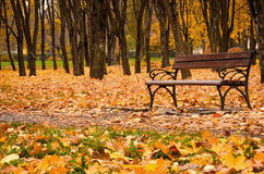 An empty bench is in an autumn park Royalty Free Stock Photo