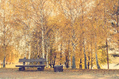 Empty bench in the autumn park. Empty wooden bench on the autumn birch trees background Royalty Free Stock Photography