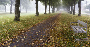 Empty bench in autumnal park. Empty park at early morning with nice mist Royalty Free Stock Photos