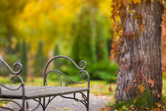 Empty bench in the autumnal park Stock Photos