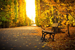 Empty bench in beautiful yellow park scenery. Beautiful scenery in autumnal yellow park of Gdansk, Poland Royalty Free Stock Image