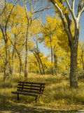An Empty Bench in the Cottonwoods Stock Photos