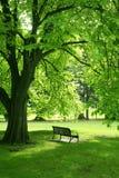 Empty bench in green garden Stock Images