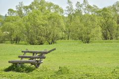 The Empty bench on a green grass Royalty Free Stock Photos