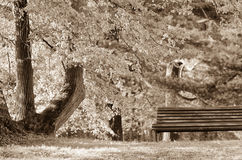 Empty bench on the lake shore. Picture of loneliness, but also of peace. Empty bench on lake shore. Picture of loneliness, but also of peace Royalty Free Stock Images