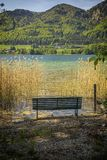 Empty bench at a lake on a sunny day in summer royalty free stock image