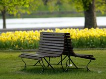 Empty bench in the park Royalty Free Stock Photos