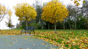 Empty bench in the park. During autumn Stock Photography