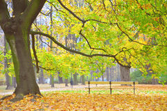 Empty bench in a park among fallen leaves during autumn Stock Image