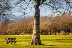Empty bench in a park Stock Images