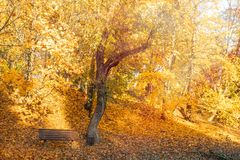 Empty bench under the autumnal trees stock photography