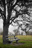 Empty Bench under Dead Tree Stock Photos