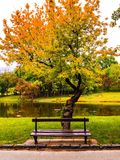 Empty bench under spring tree Royalty Free Stock Photo