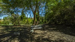 Empty bench under tree. Good weather in morning with trees. White bench under the trees royalty free stock photography