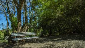 Empty bench under tree. Good weather in morning with trees. White bench under the trees royalty free stock photo