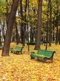 Empty bench in urban park. Green empty bench in urban park in autumn Stock Photos