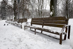 Empty bench in Winter Park Royalty Free Stock Photo